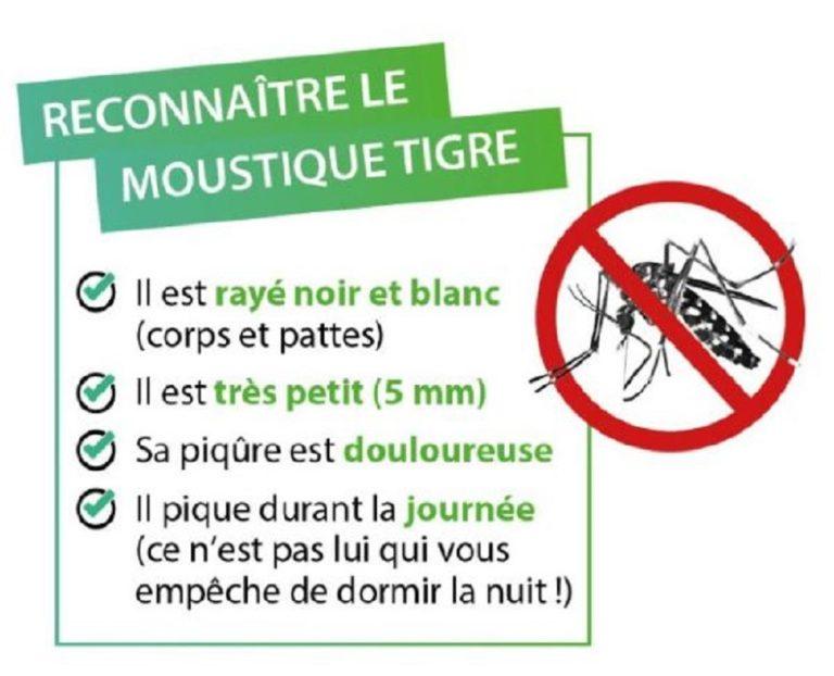 moustique-tigre-768x622